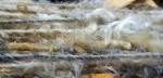 Beautiful Fleece = Beautiful Yarn!